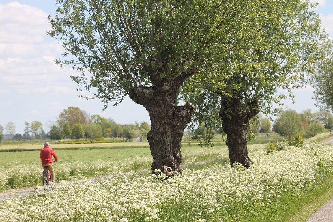 Bomen en groen in onze gemeente