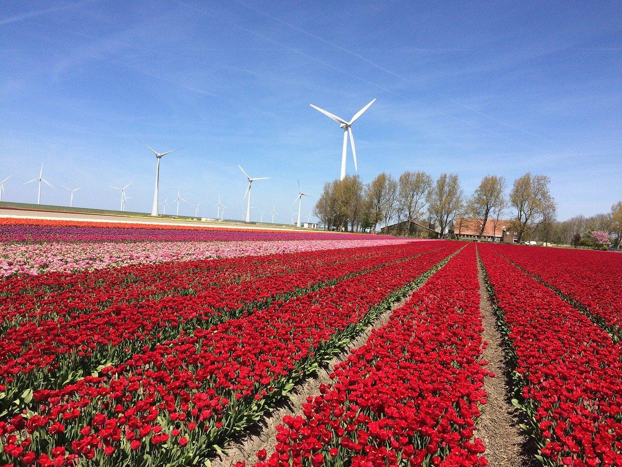 Landschap Flevoland
