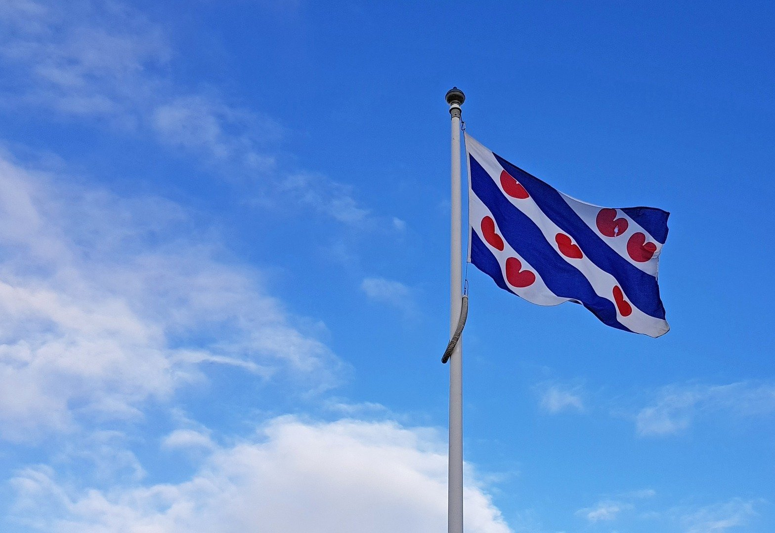 Friese vlag wapperend